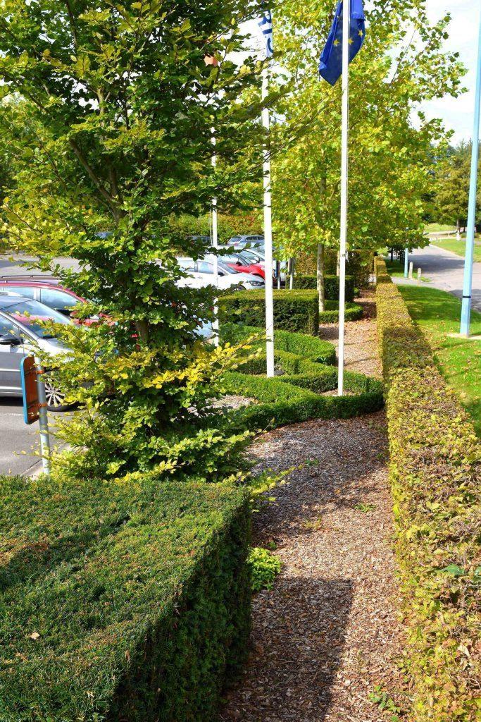 devallee-nathalie-architecte-paysagiste-jardin-creation-entretien-travaux-Iris5